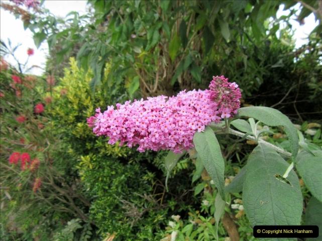 2019-07-11 A Poole Garden in Summer. (122) 122