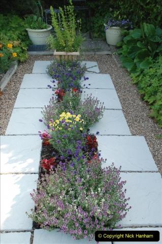 2019-07-11 A Poole Garden in Summer. (27) 027