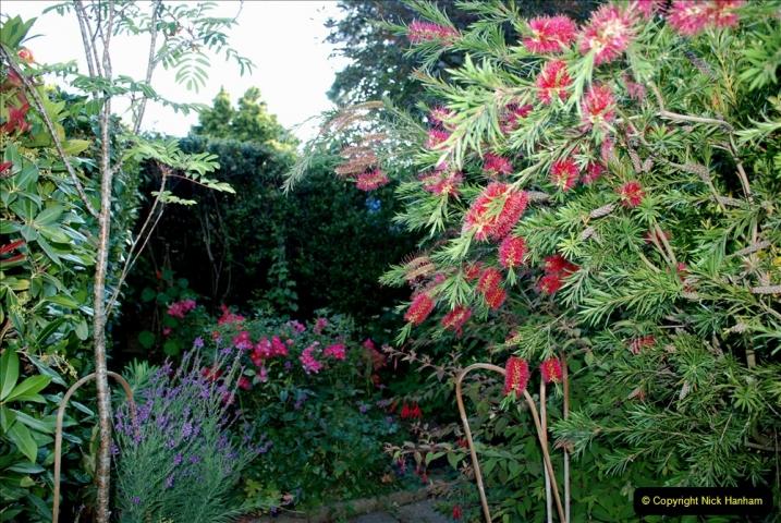 2019-07-11 A Poole Garden in Summer. (40) 040
