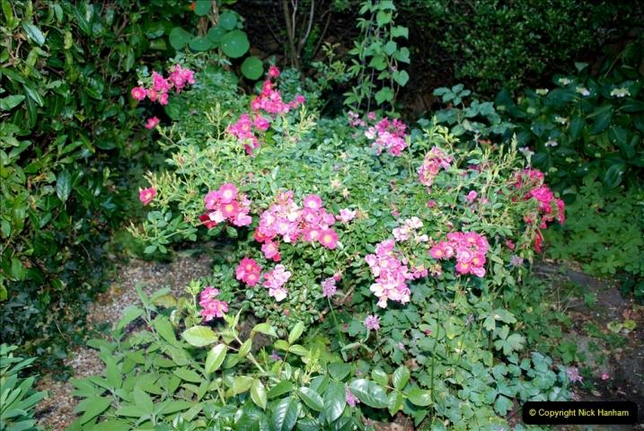 2019-07-11 A Poole Garden in Summer. (41) 041