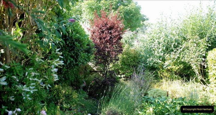 2019-07-11 A Poole Garden in Summer. (43) 043