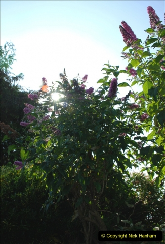 2019-07-11 A Poole Garden in Summer. (55) 055