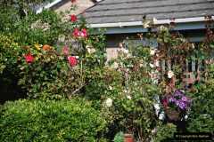 2019-07-11 A Poole Garden in Summer. (29) 029