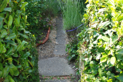 2019-07-11 A Poole Garden in Summer. (38) 038