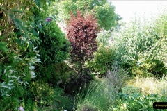 2019-07-11 A Poole Garden in Summer. (43) 043