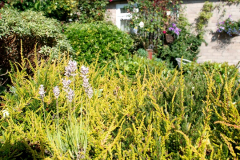 2019-07-11 A Poole Garden in Summer. (59) 059
