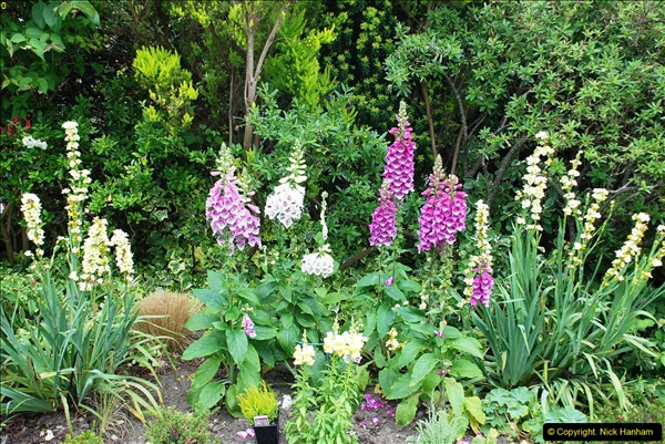 2016-06-16 A Poole Garden in early summer.  (1)01