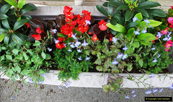 2016-06-16 A Poole Garden in early summer.  (18)18