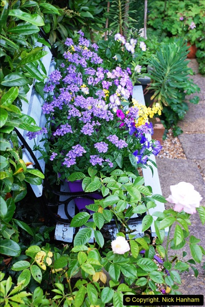 2016-06-16 A Poole Garden in early summer.  (43)43