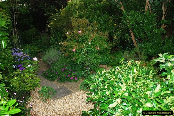 2016-06-16 A Poole Garden in early summer.  (56)56