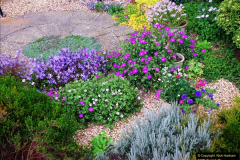 2016-06-16 A Poole Garden in early summer.  (62)62