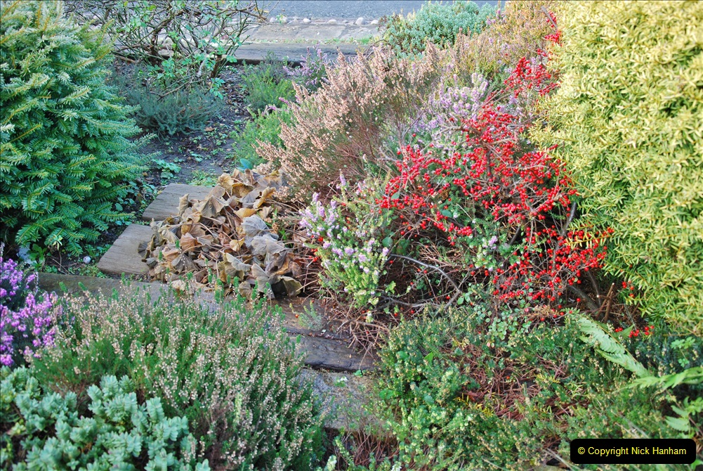 2018-01-03 A Poole Winter Garden. (100) 101