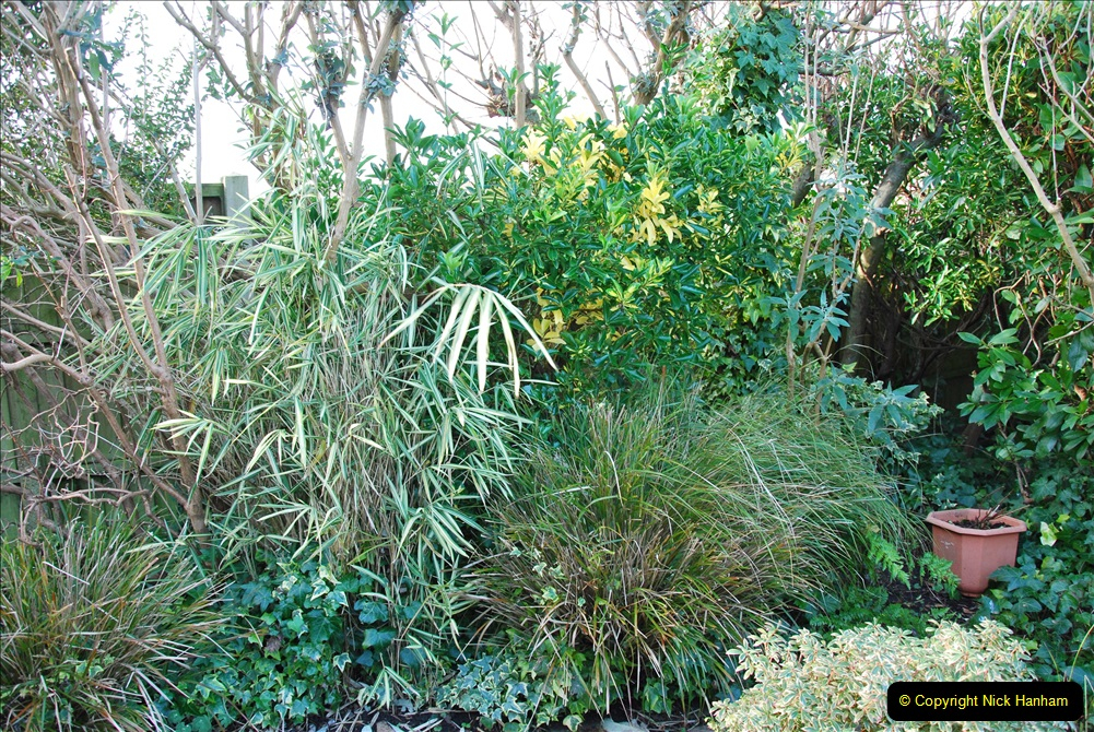 2018-01-03 A Poole Winter Garden. (22) 023