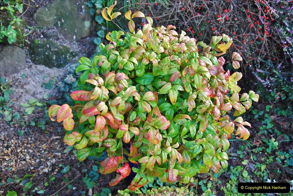 2018-01-03 A Poole Winter Garden. (50) 051