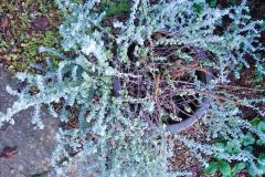 2018-01-03 A Poole Winter Garden. (56) 057