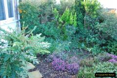 2018-01-03 A Poole Winter Garden. (97) 098