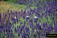 2014-07-22 Avebury, Wiltshire.  (40)040