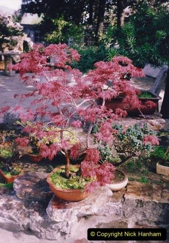 Bonsai Garden in Nanjing.  (7)007