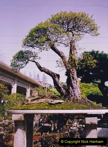 Bonsai Garden in Nanjing.  (8)008