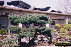 Bonsai Garden in Nanjing.  (2)002