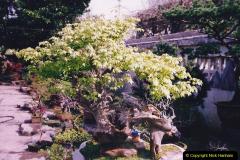 Bonsai Garden in Nanjing.  (3)003