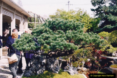 Bonsai Garden in Nanjing.  (5)005
