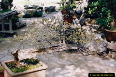 Bonsai Garden in Nanjing.  (6)006