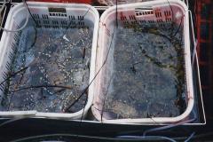 China 1993 April China into Hong Kong. (168) Live fish resturant. 168