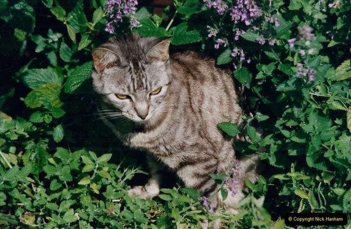2002 Cleo. (83).083