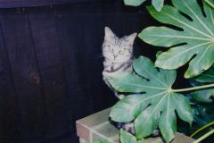 1997 Cleo. (2) 002