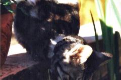 1999 Cleo. (40) 040