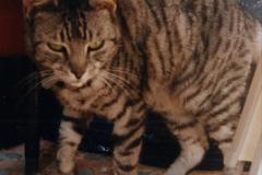 1999 Cleo. (47) 047