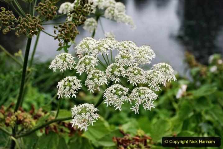 2020-08-19 Covid 19 Visit The Vyne (NT) near Basingstoke, Hampshire. (18)  018