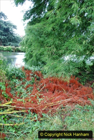 2020-08-19 Covid 19 Visit The Vyne (NT) near Basingstoke, Hampshire. (19)  019