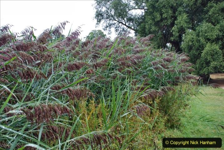 2020-08-19 Covid 19 Visit The Vyne (NT) near Basingstoke, Hampshire. (20)  020