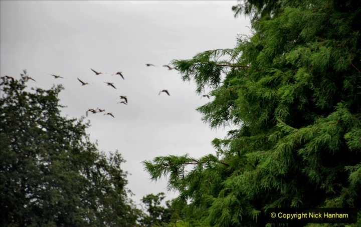 2020-08-19 Covid 19 Visit The Vyne (NT) near Basingstoke, Hampshire. (24)  024