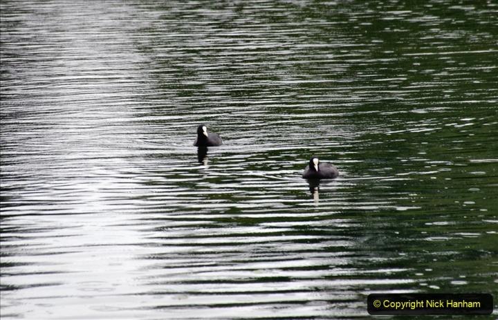 2020-08-19 Covid 19 Visit The Vyne (NT) near Basingstoke, Hampshire. (29)  029