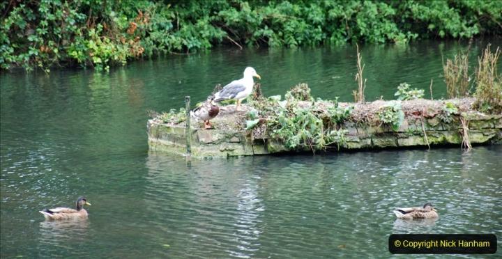 2020-08-19 Covid 19 Visit The Vyne (NT) near Basingstoke, Hampshire. (34)  034