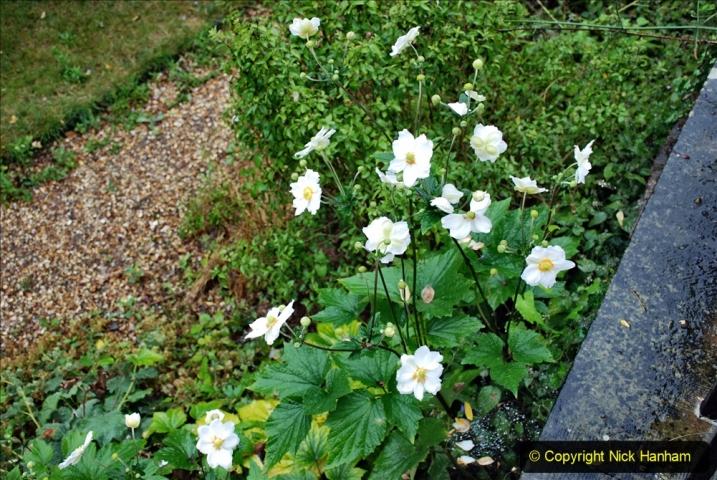 2020-08-19 Covid 19 Visit The Vyne (NT) near Basingstoke, Hampshire. (62)  062