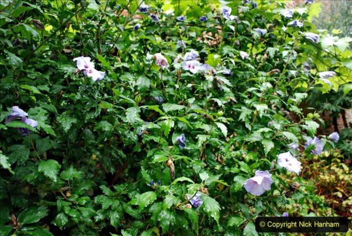 2020-08-19 Covid 19 Visit The Vyne (NT) near Basingstoke, Hampshire. (64)  064