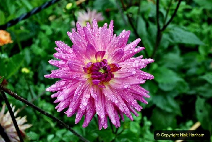 2020-08-19 Covid 19 Visit The Vyne (NT) near Basingstoke, Hampshire. (80)  080