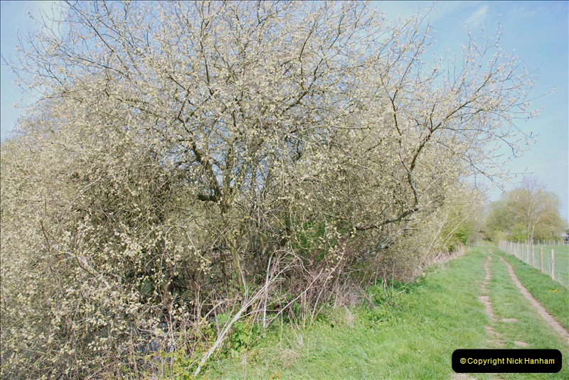 2019-04-14 to 15 Dorchester-on-Thames, Oxfordshire. (133) A walk near Dorchester and the River Thames. 136133