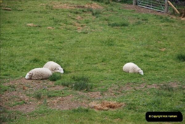 2012-05-30 The Jacobite, Glenfinnan & Oban,  (162)0220