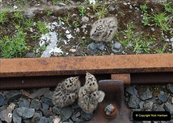 2012-05-30 The Jacobite, Glenfinnan & Oban,  (179)0237