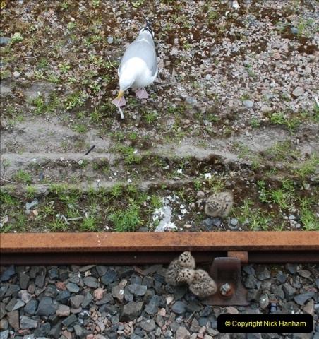2012-05-30 The Jacobite, Glenfinnan & Oban,  (180)0238