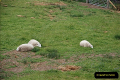 2012-05-30 The Jacobite, Glenfinnan & Oban,  (162)0220