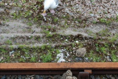 2012-05-30 The Jacobite, Glenfinnan & Oban,  (180)0238