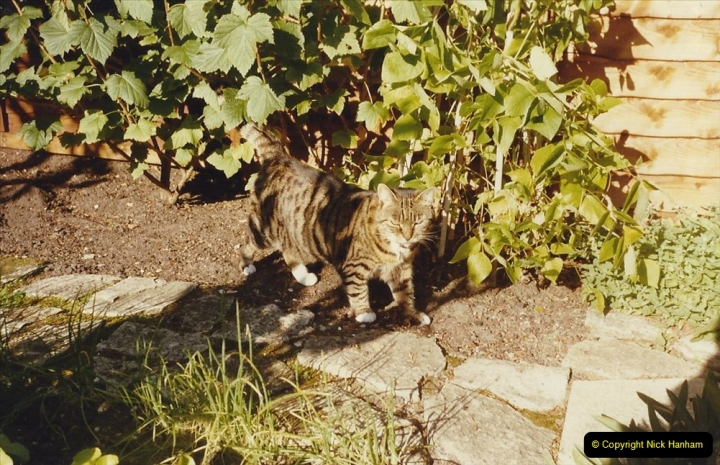 1993 Jenny. (62) 063