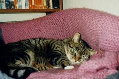 1987 Jenny. (10) 011