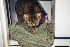 1989 Jenny. (27) 028